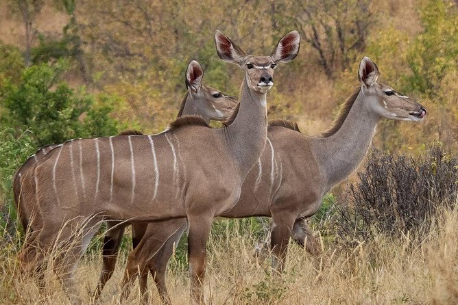 1 Night / 2 Days safari to Ruaha National Park