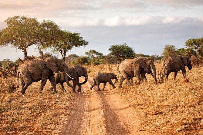 8 Days Tanzania Wildlife camping Safari