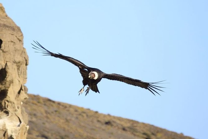 Condor sighting + lunch
