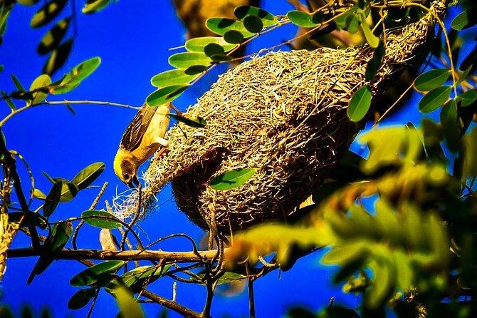 Bagan Birdwatching Activities