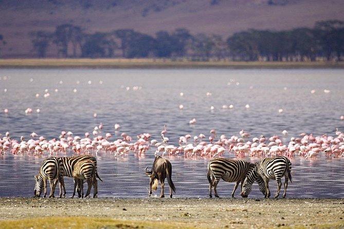Pink hues and Masai Mara Safari
