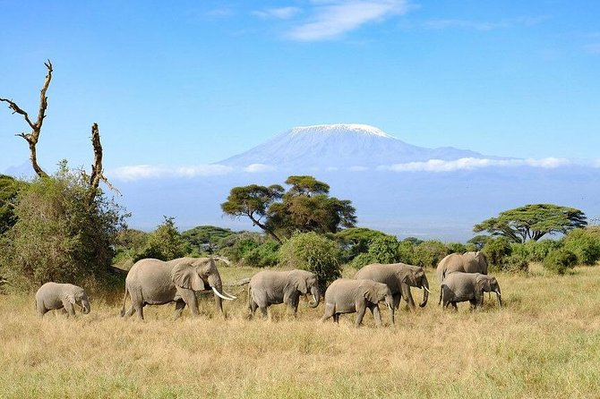 3 Days Amboseli Private Safari