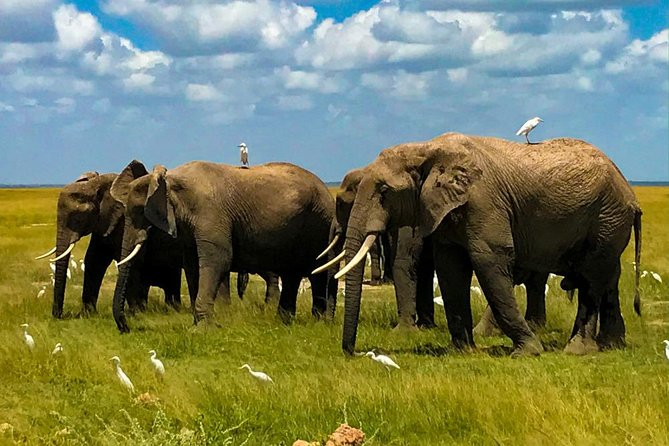 8 Days Stunning Safari in Kenya and Tanzania