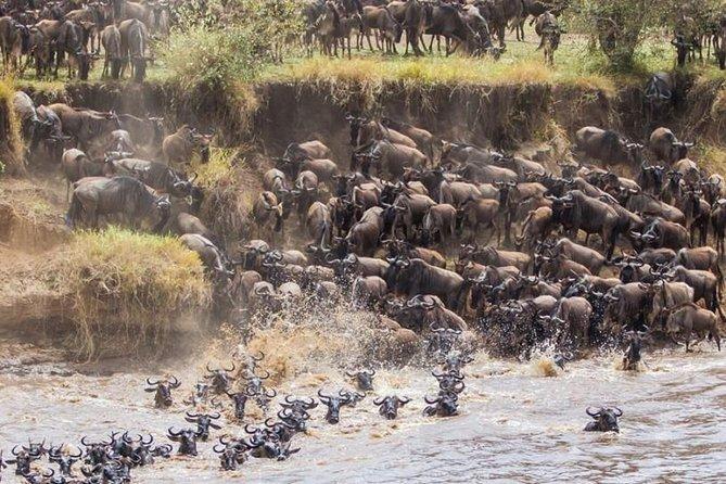 2 days maasai mara joining safari
