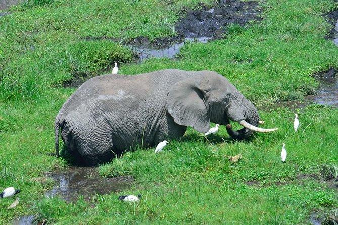 3 Days Snow capped Safari