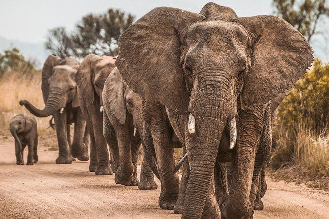 Day Tour Safari Manyaraa National Park