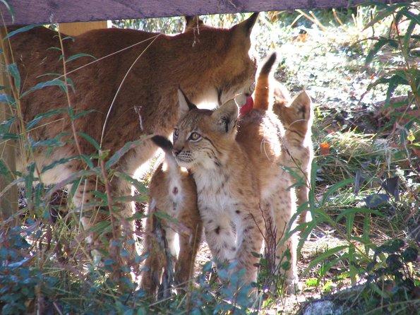Ranua Zoo & A Sweet Deal At Fazer