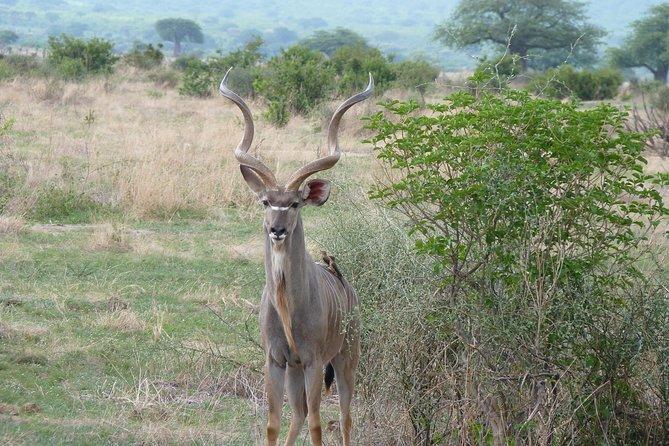 10 Days/9 Nights in Southern Tanzania
