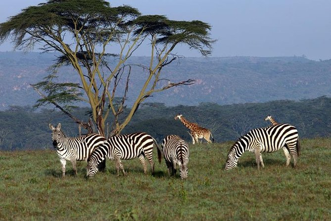 3 day Meru National Park Safari