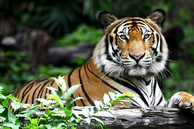 4 Days Amazing Golden Triangle With Wildlife and Tigers Safari in Ranthambore