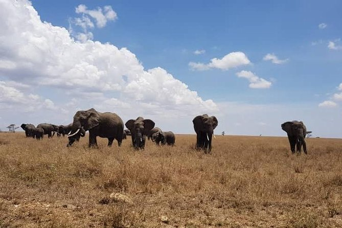 6 Days Tanzania Adventure Safari Tours