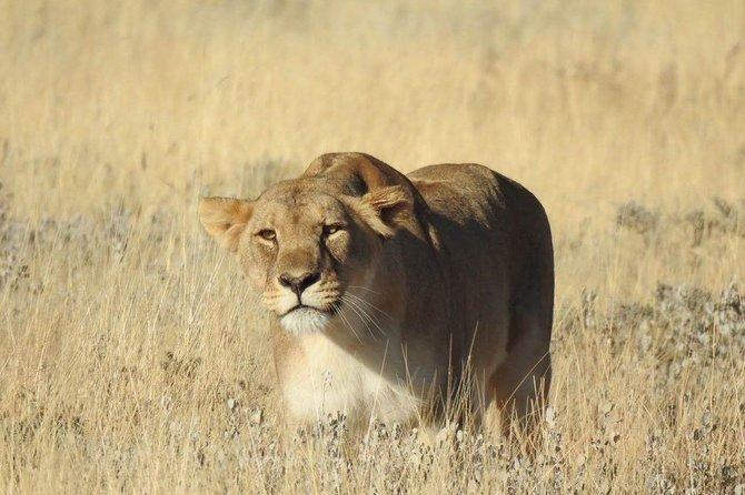 3days Pilanesburg National Park Safari