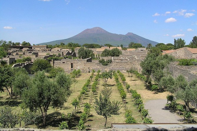 Pompeii and wine tasting shore excursion from Naples - Skip the line included
