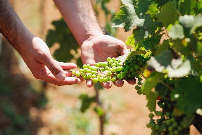 Wine Tasting in Albania – Dedicated Day Tour of Authentic Wines