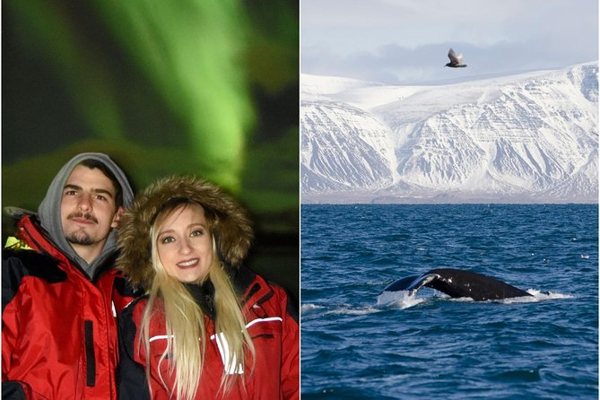 Icelandic Whales & Northern Lights from Reykjavík