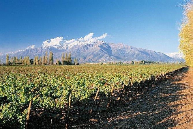 Tour to Concha y Toro Winery, Santiago de Chile