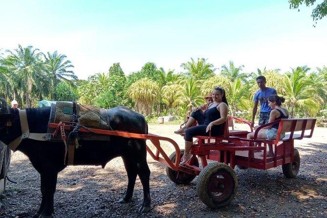 Organic Palm Tour