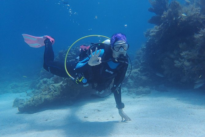 Discover Scuba today no prior experience necessary. During open water afternoon portions you will explore a coral reef.