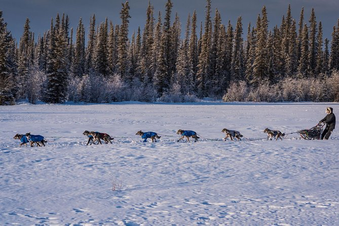 Sled Dog Mushing and Kennel Tour - 2 Hours