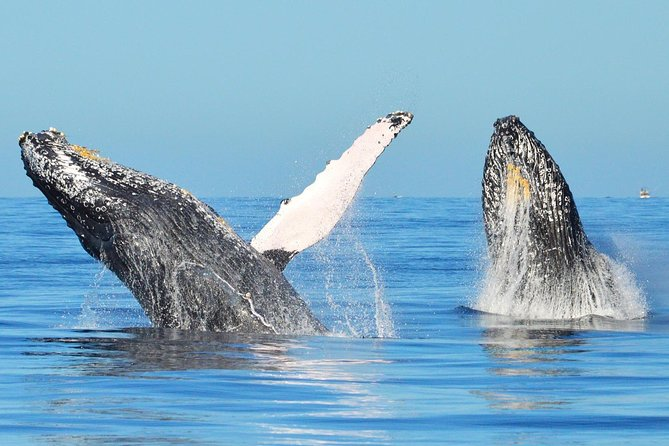 See sea life in a clear boat! Tour the Arch, Land's End and all the best places