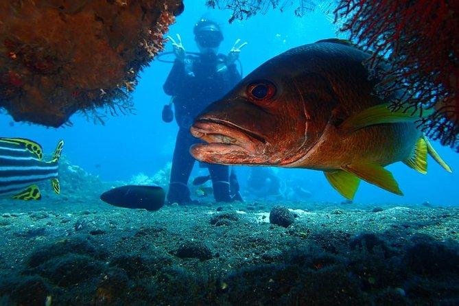 Tulamben USAT Liberty Shipwreck Scuba Dive Adventure