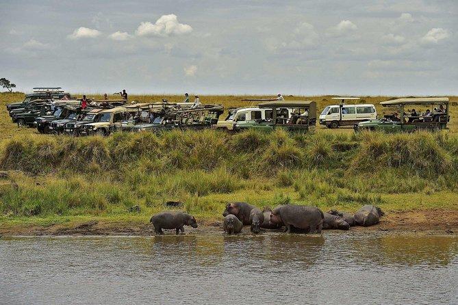 3 Days Masai Mara Luxury Safari