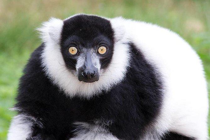 Andasibe National Park and lemur's Island