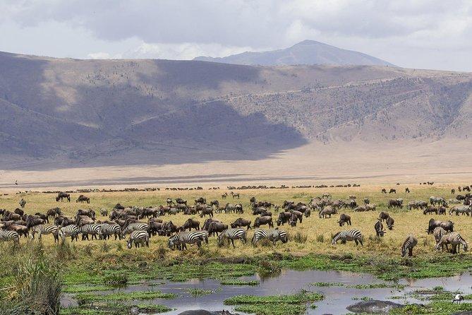 3 Days safari from Arusha town