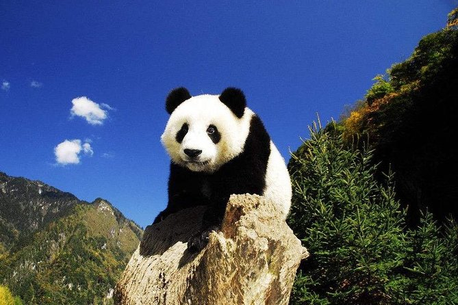 Chengdu in One Day from Kunming by Air: Leshan Giant Buddha, Pandas and More