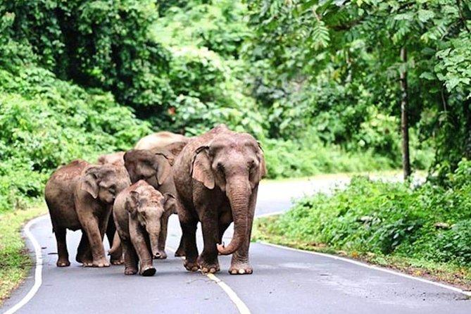 Khao Yai advanturous jungle tour