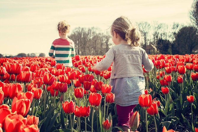 Colorful Dutch Tulips Fields: Keukenhof Garden Private Tour with a Local