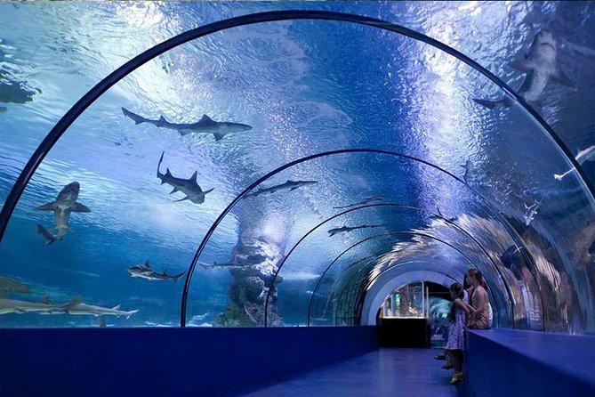 Aquarium in Antalya from regions