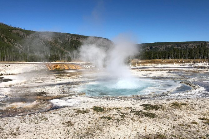 Private Tour of Yellowstone's Geysers, Hot Springs & more. Drive Less See More!