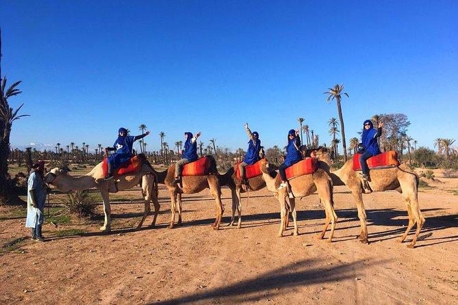 Half-Day Marrakech Palmeraie Adventure with Camel Ride