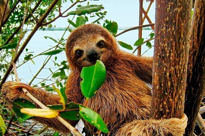 Rainforest Bijagua Ranas Costa Rica Excursions Travels