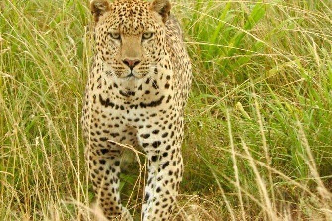 Amazing 2 days Maasai Mara Game Safaris with-SILVER SPARK AFRICA SAFARIS