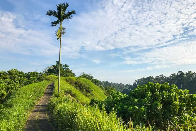 Full-Day Private Most Instagenic Spots Tour in Ubud