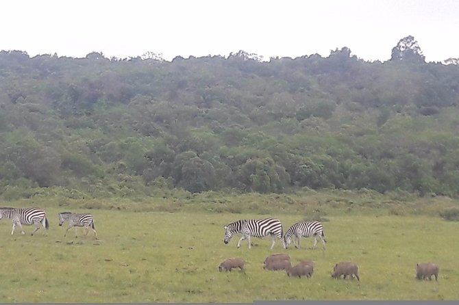 Arusha national park (DAY TRIP)