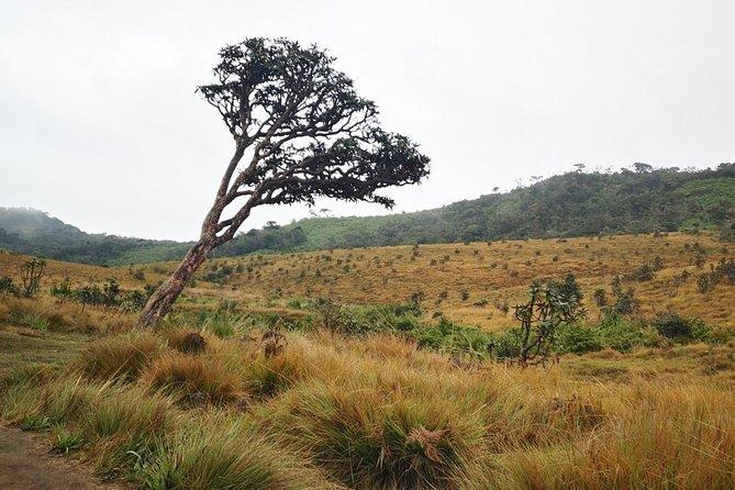 Hortan Plains van from nuwaraeliya call
