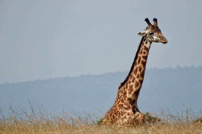 3day-Silver Spark Safaris Adventure and Game drive Maasai Mara National Park