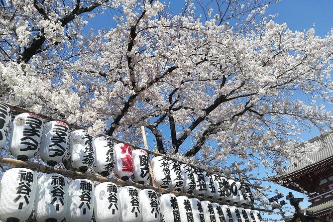 Cherry Blossom highlights, Asakusa, Ueno & Meiji shrine