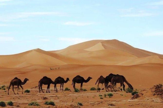 2 Days Marrakech to M'hamid Private Tour with Desert Camp