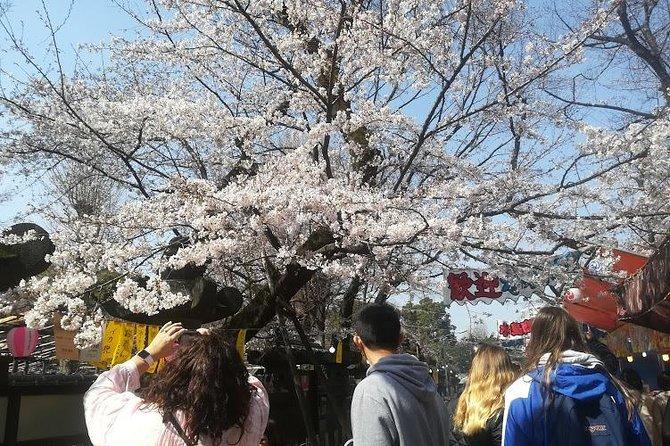 Cherry Blossom highlights, Asakusa, Ueno & Nippori Fabric Town