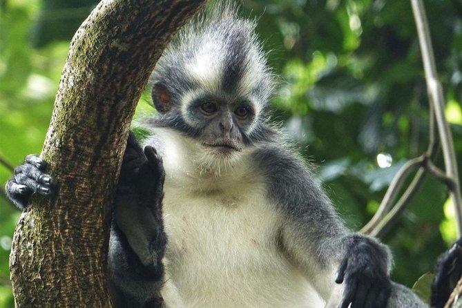CHICKEN TREK 4 Hours JungleTrekking + RAFTING (see Orangutan)