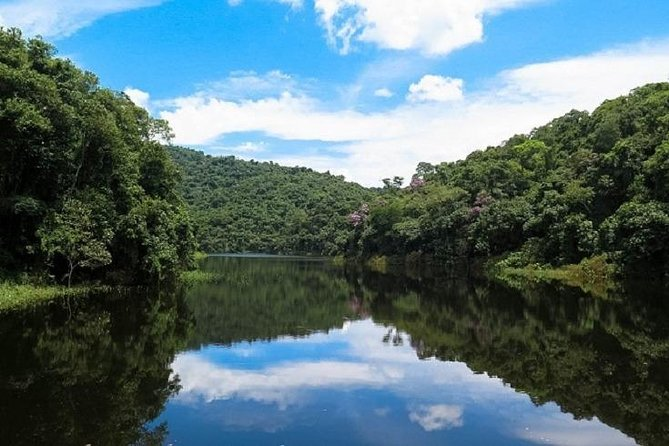 São Paulo, Brazil - Eco Tour: Atlantic Rainforest Park Experience