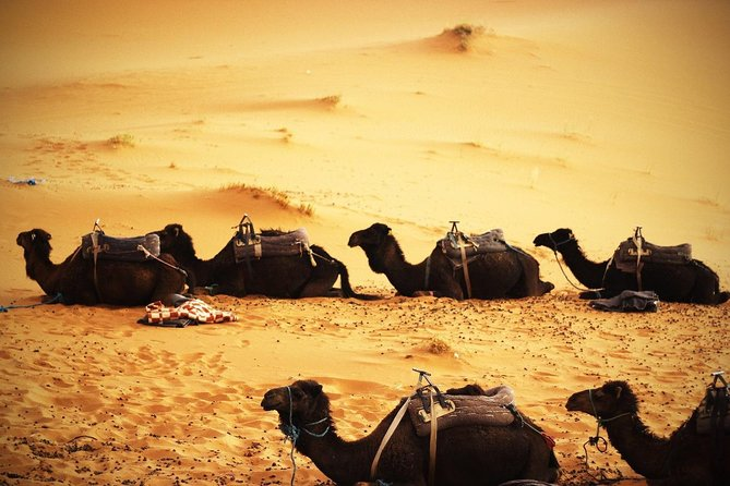 2 Day Tour: Marrakech to Zagora Desert with Camel trekking