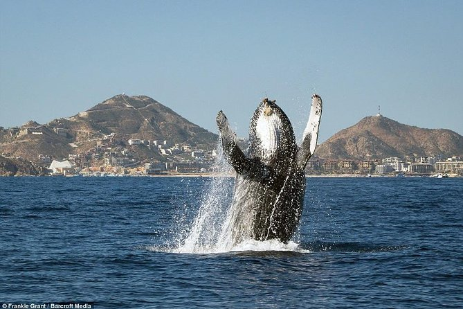 Whale Watching & Boat Tour of Everything Cabo! See the Arch, Land's End and more