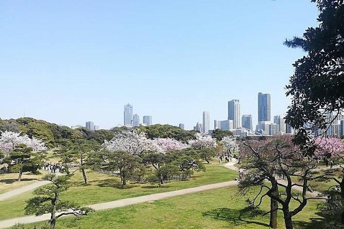 Cherry Blossom highlights, Hamarikyu garden, Asakusa, Meiji shrine