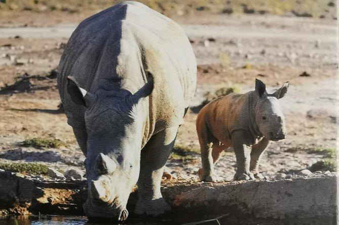 Full day Cape Safari Inverdoorn Game Reserve
