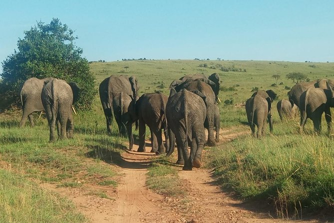 8 Days Maasai mara - Ngorongoro - Serengeti - Lake Manyara safari